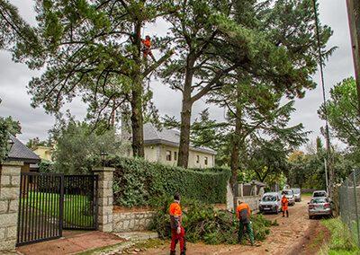 mantenimiento de arboles y jardines