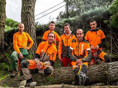Podas, desbroce y mantenimiento de jardines Madrid