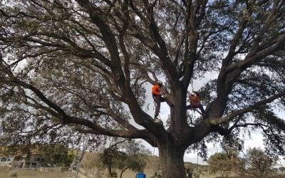 Trabajo de poda de árboles