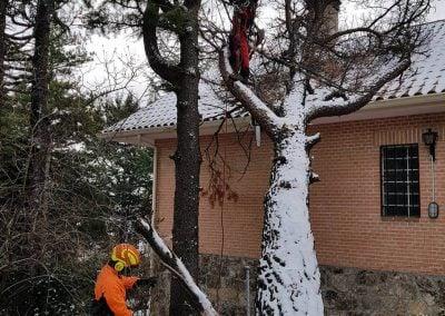 podando un árbol caído por el temporal