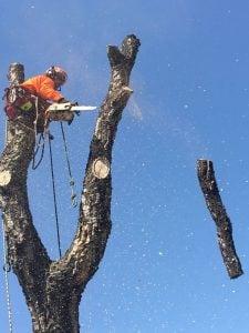 trabajos de podas y talas en Madrid
