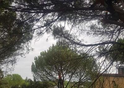 Poda El Escorial