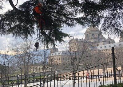 poda monasterio Escorial