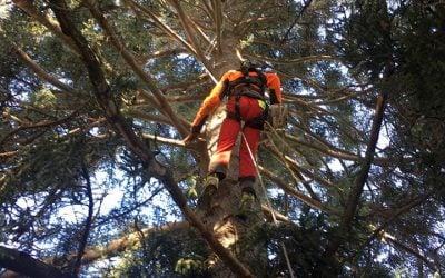 Eliminación ramas secas El Escorial
