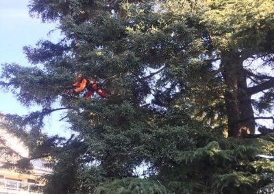 ramas secas podando