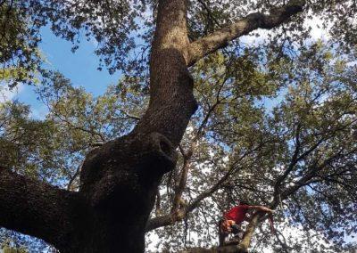 eliminación de ramas de la vía