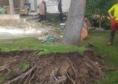 árbol arrancado por vendaval. Extracción de tronco