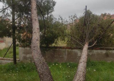 árbol caído por temporal