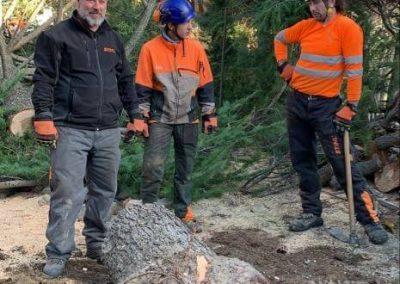 eliminación de tronco árbol caído por vendaval