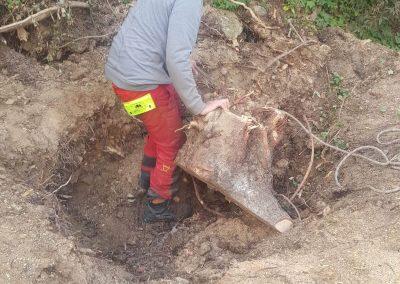 especialistas extracción de tronco árboles caídos