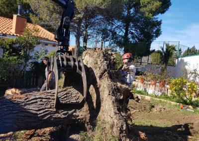 especialistas en árboles caídos por vendaval